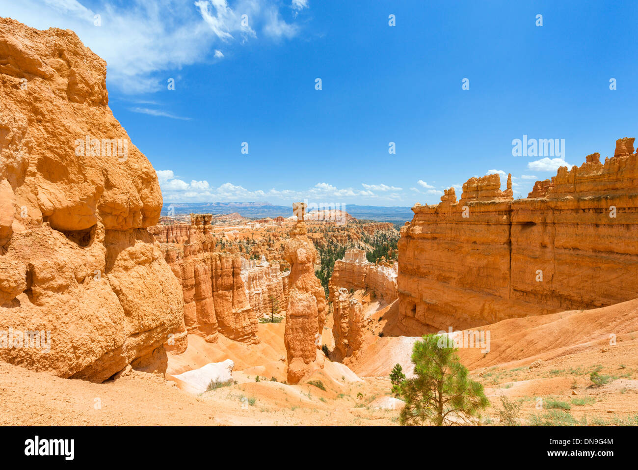 Thors Hammer monolith sur le sentier en boucle Navajo, Sunset Point, Bryce Amphitheater, Bryce Canyon National Park, Utah, USA Photo Stock