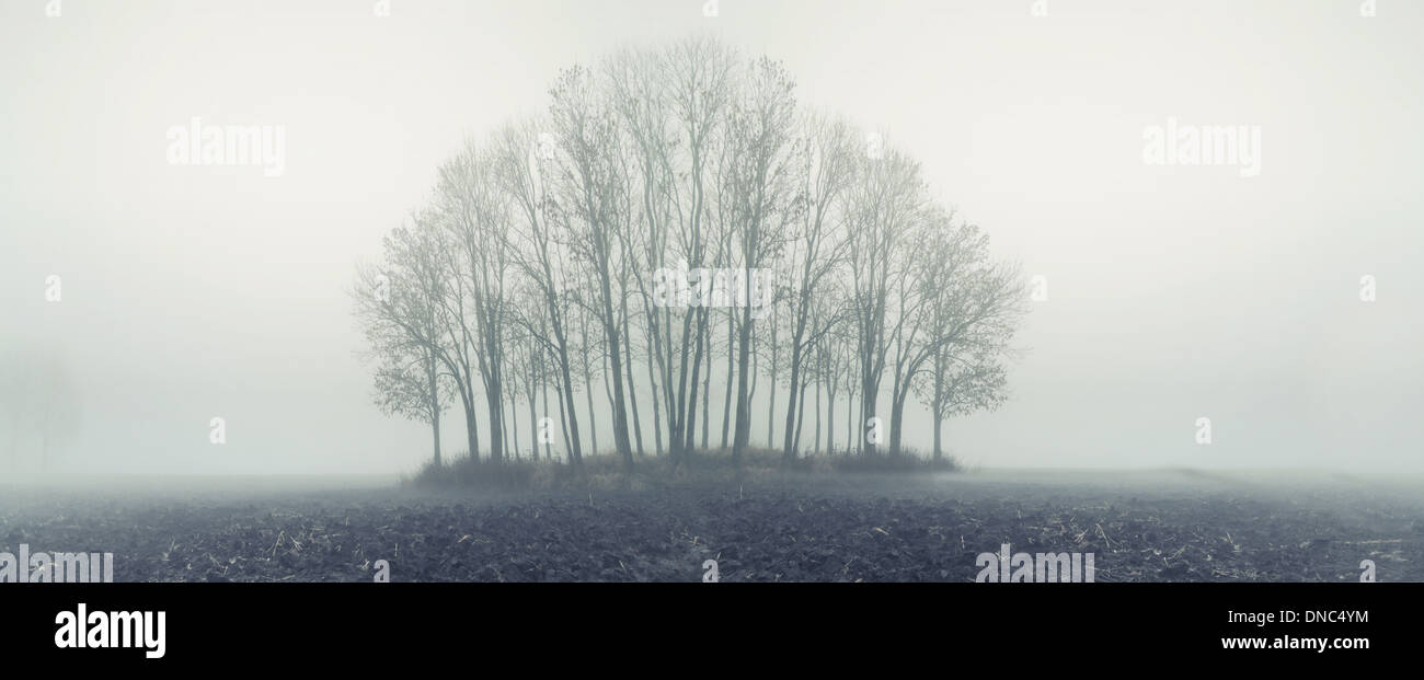 Petite forêt en automne Matin brumeux Photo Stock