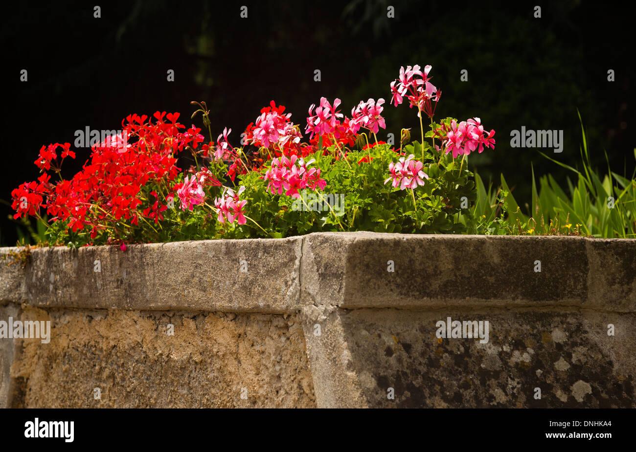 Des fleurs dans un jardin, la Villa Cimbrone, Ravello, Province de Salerne, Campanie, Italie Banque D'Images