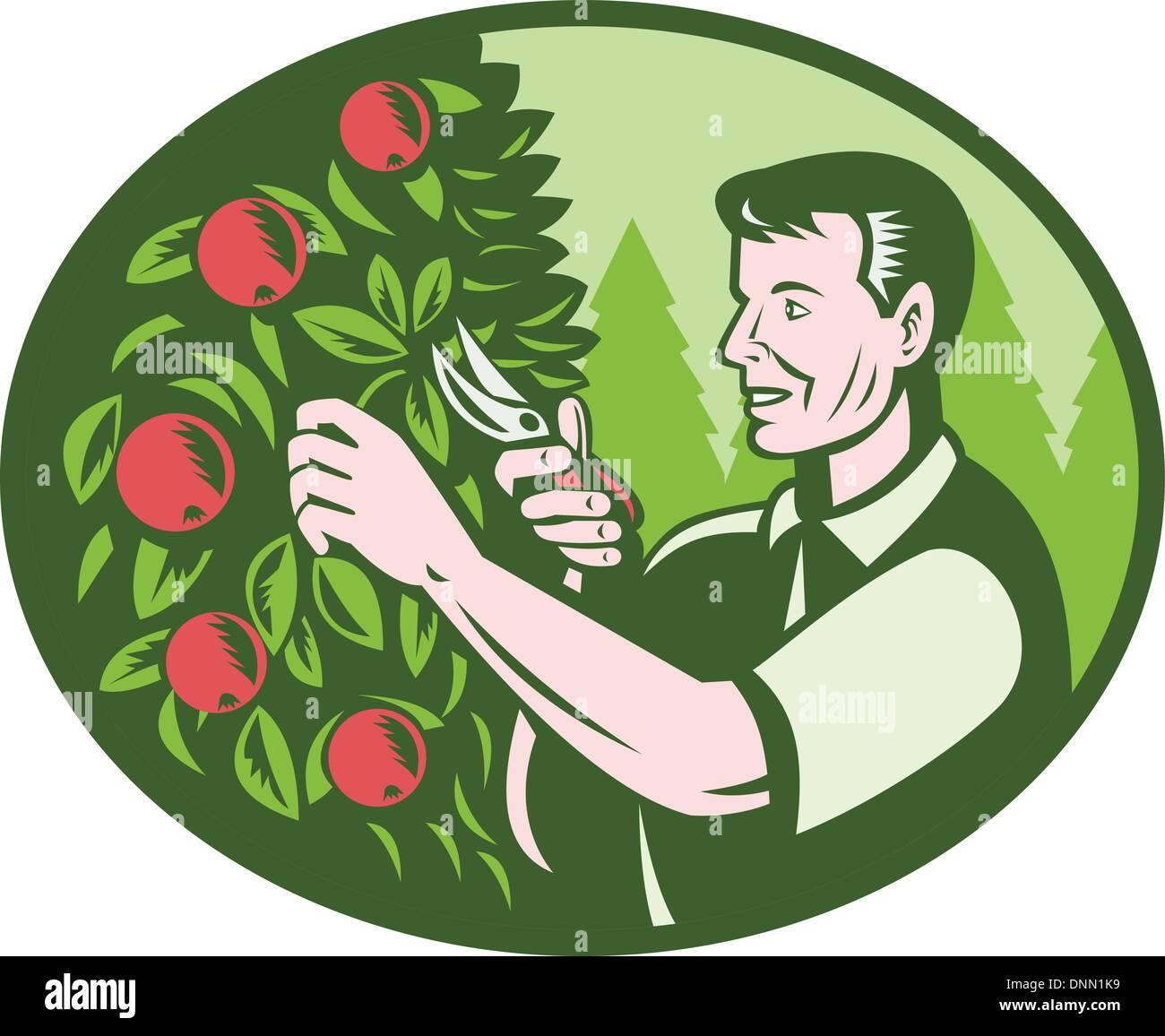 Arbre Fruitier D Intérieur illustration de l'horticulteur agriculteur cueilleur de