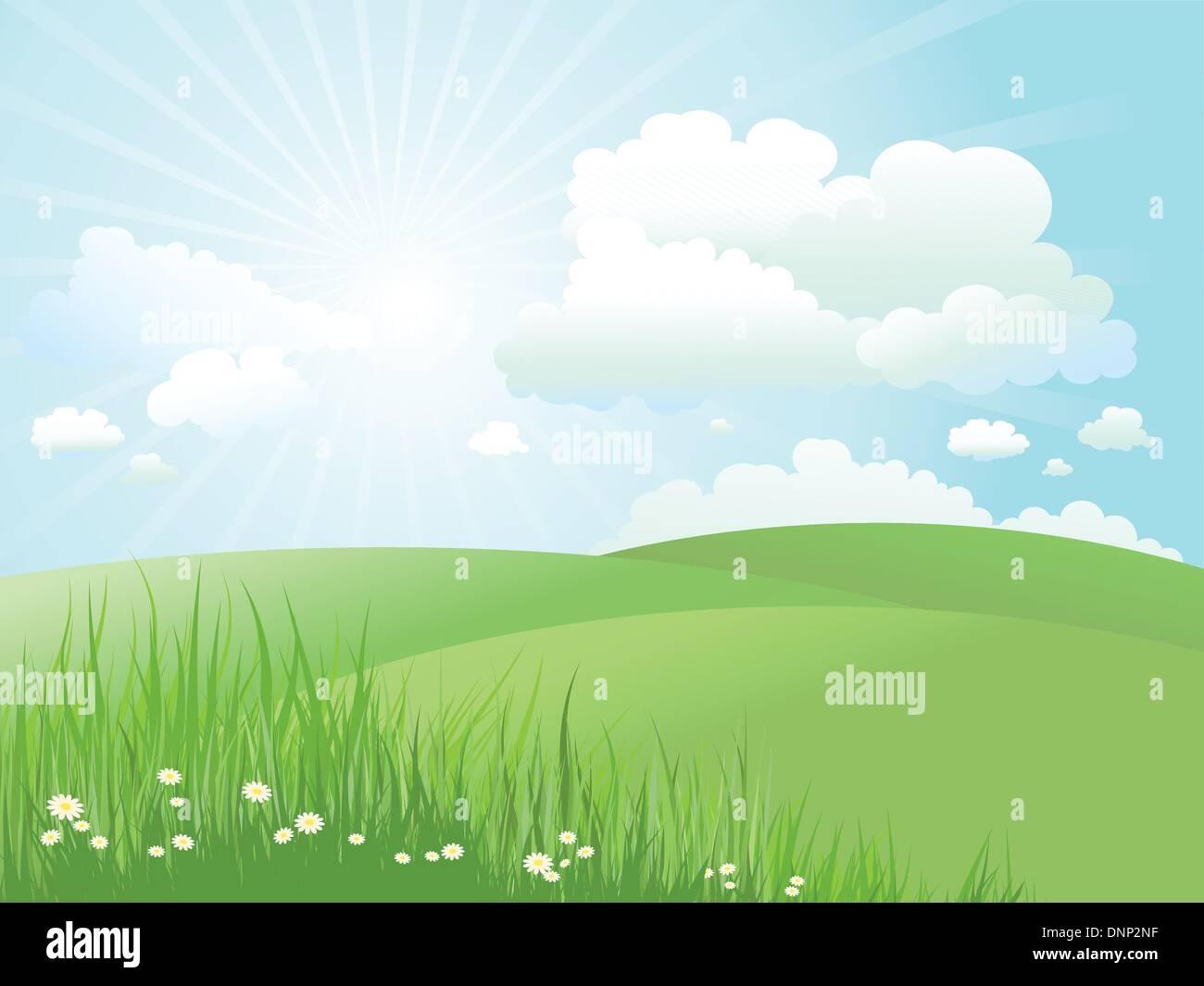 Paysage d'été avec marguerites in grass Photo Stock