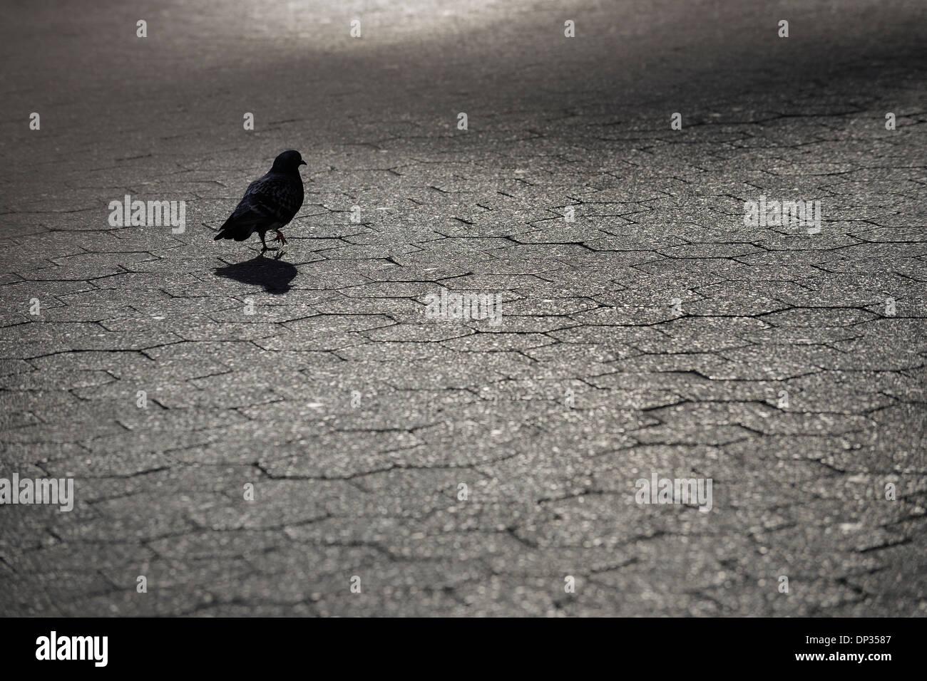 Silhouette de Pigeon sur pavés, Lower Manhattan, Manhattan, New York City, New York State, USA Banque D'Images