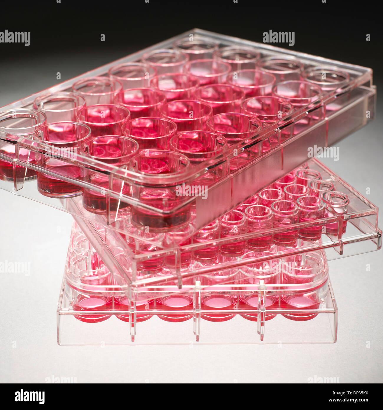 Les plaques de culture cellulaire Photo Stock