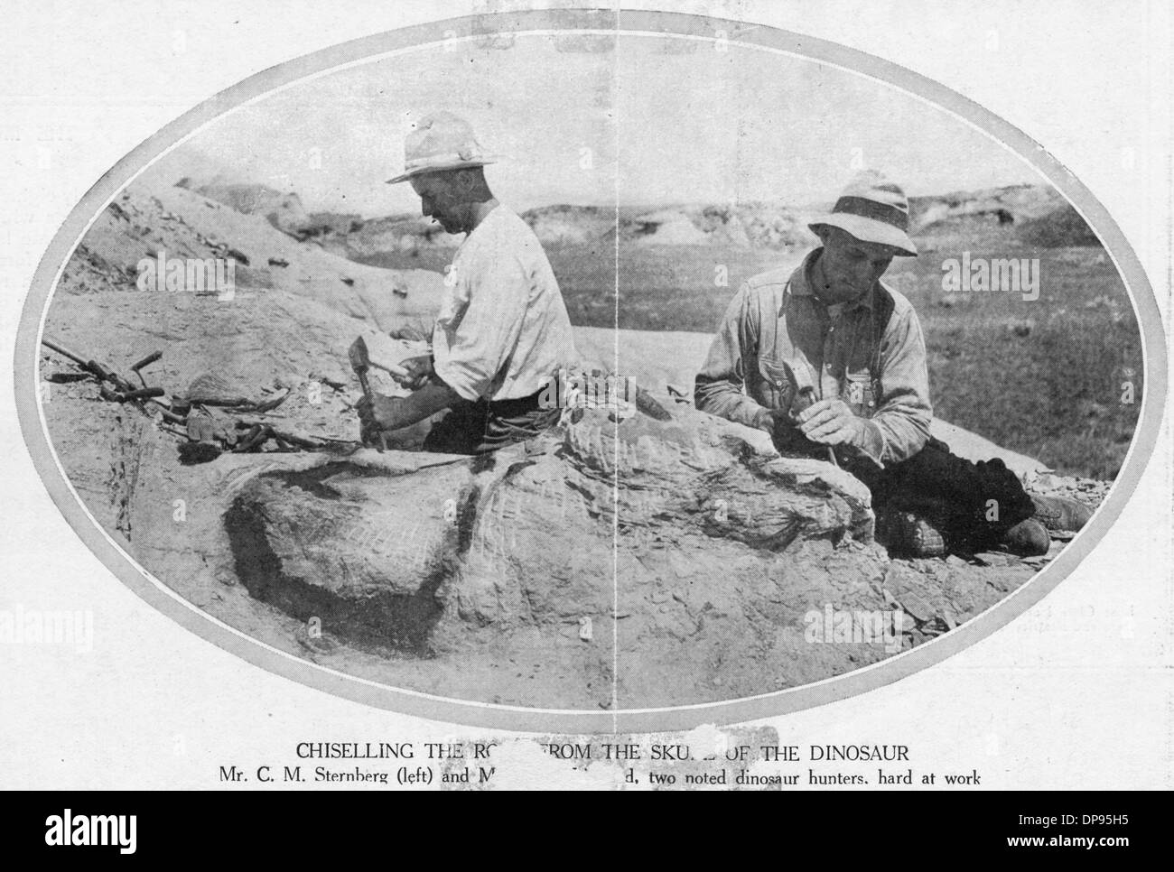 Les paléontologues/FOSSILES Photo Stock