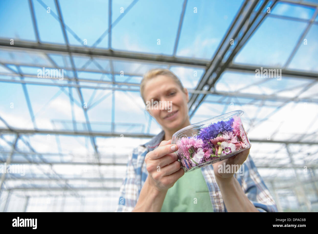 Woman holding fort de fleurs comestibles Photo Stock
