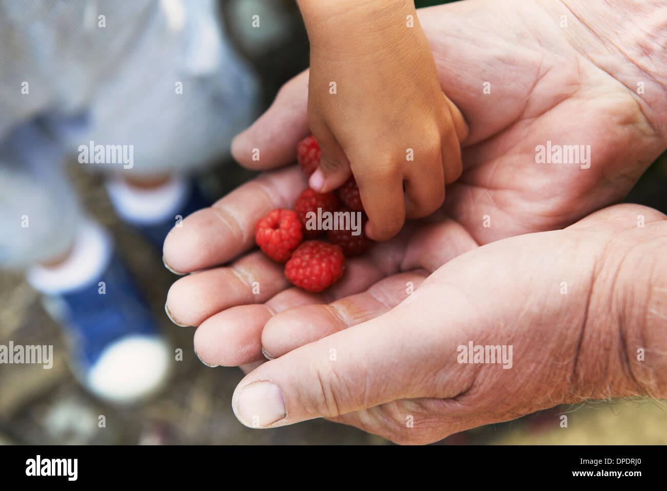 Grand-père-fils avec les framboises de partage Photo Stock