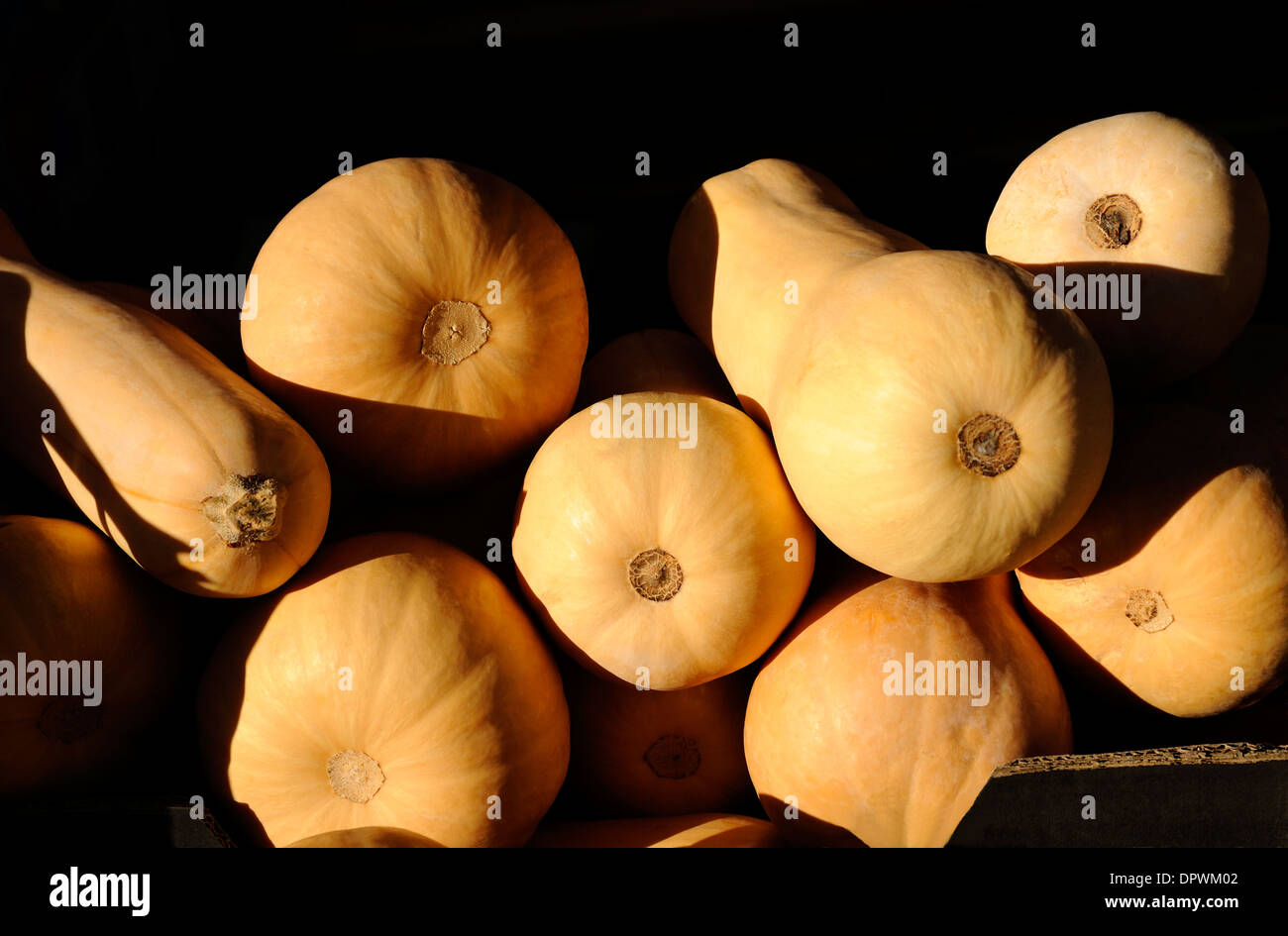 Courge musquée Photo Stock