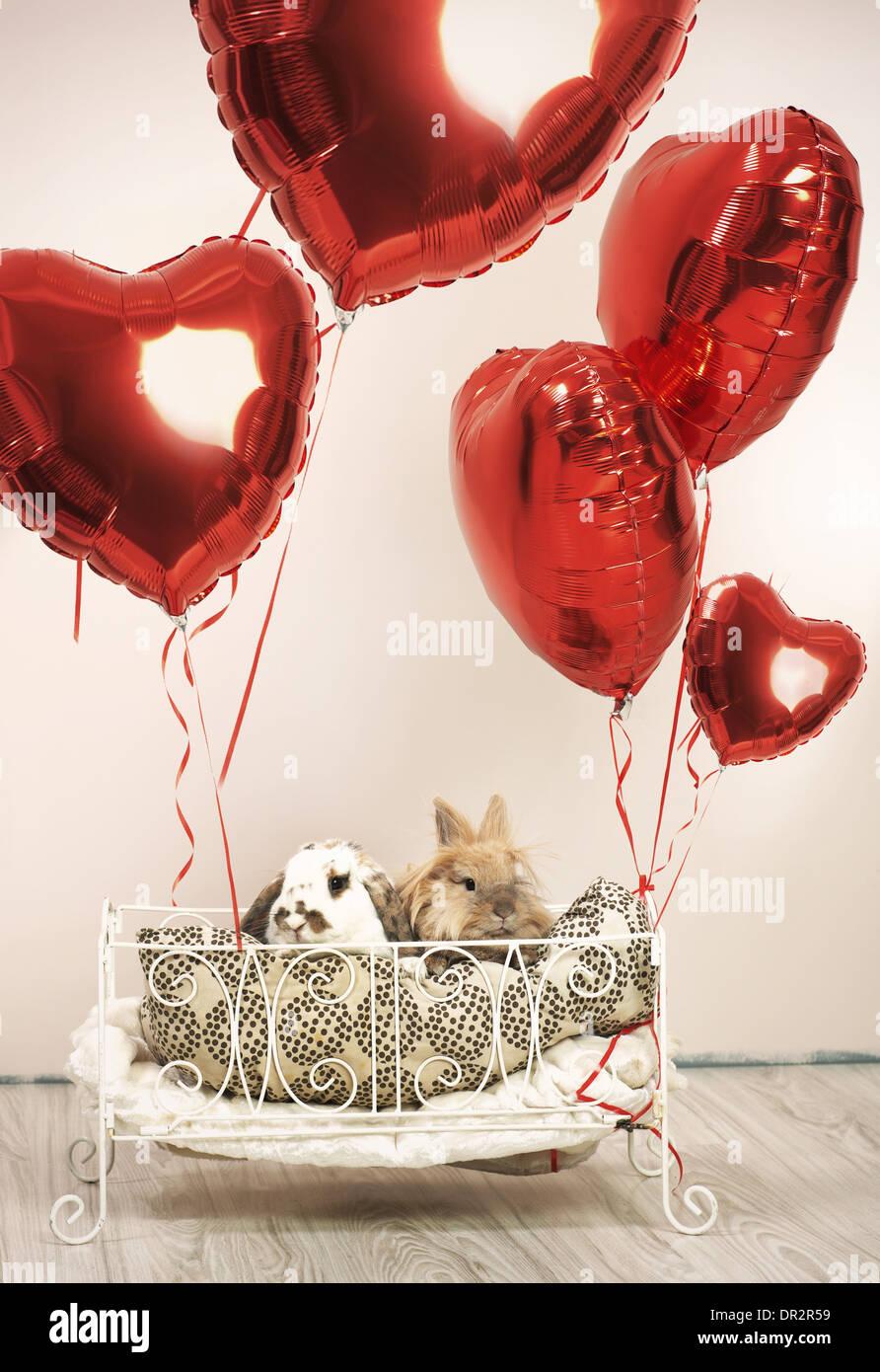 Deux lapins en scène la Saint-Valentin avec des ballons Photo Stock