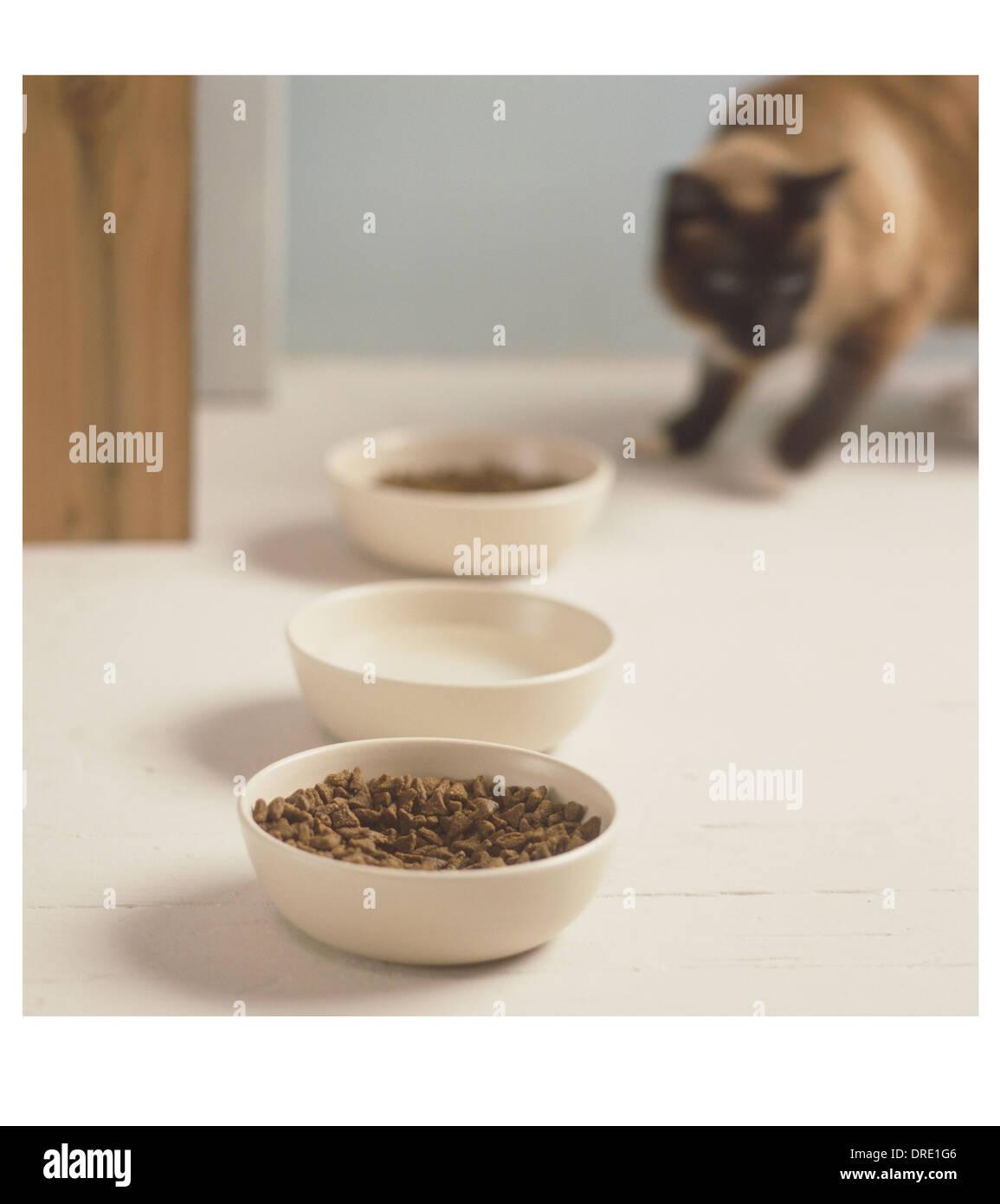 Cat s'apprête à manger Photo Stock