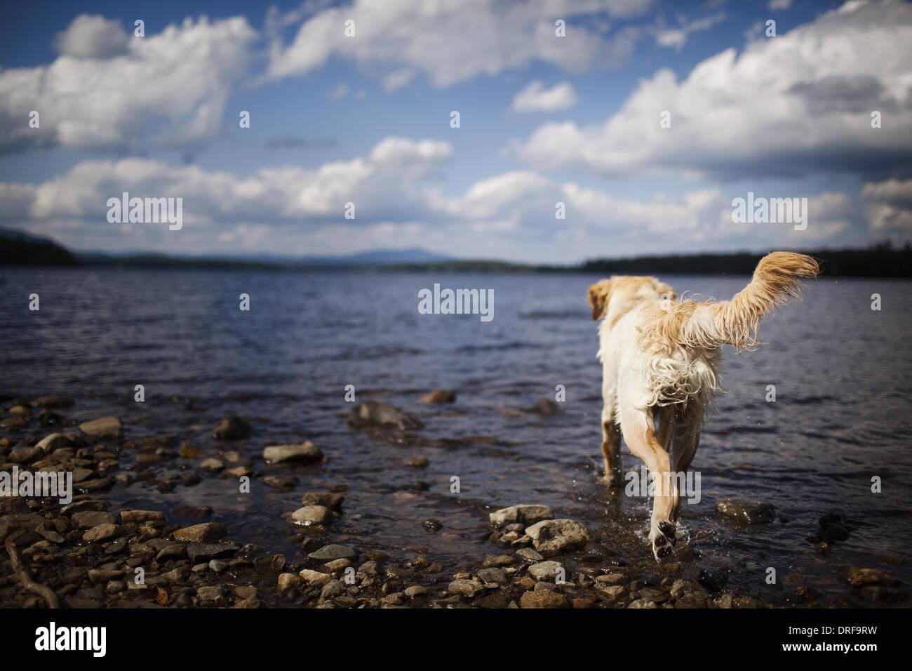 USA chien mouillé avec de longs cheveux famille-pet Photo Stock