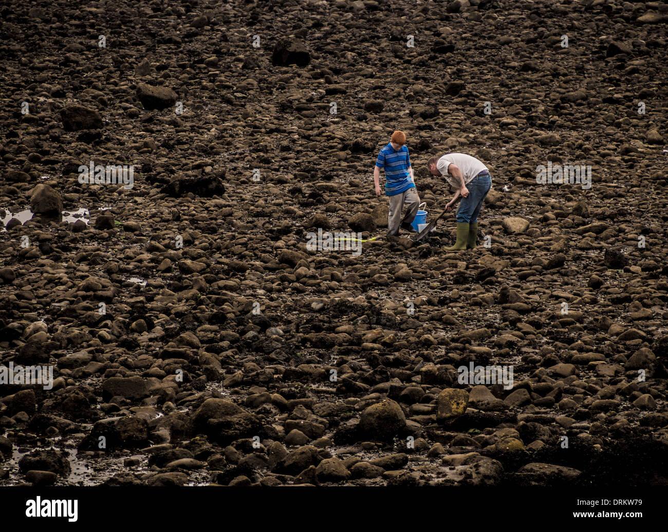 Deux hommes ramasseurs de coquillages sur la rive de l'estuaire de la Tyne, North Sheilds. Photo Stock