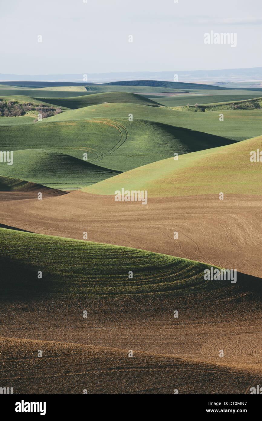 Washington USA vue sur collines verdoyantes et de champs d'élevage Photo Stock
