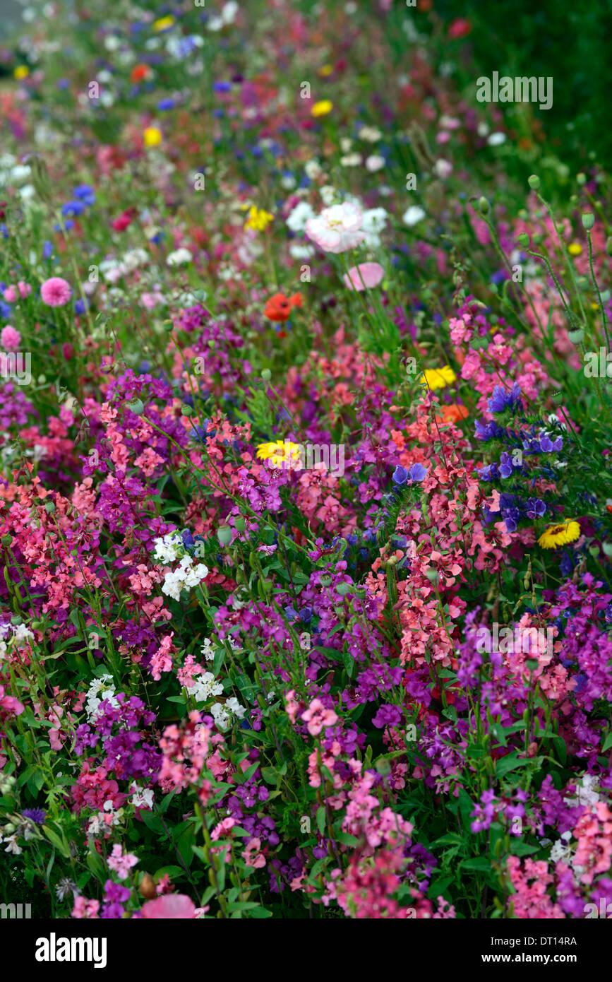 Fleurs Sauvages Fleurs Sauvages Bed Bedding Fronti Res Afficher La