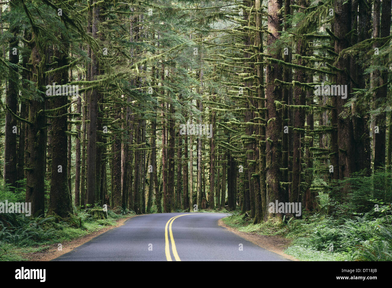 Olympic National Park Washington USA. Forêt pluviale luxuriante route Hoh Rainforest USA Photo Stock