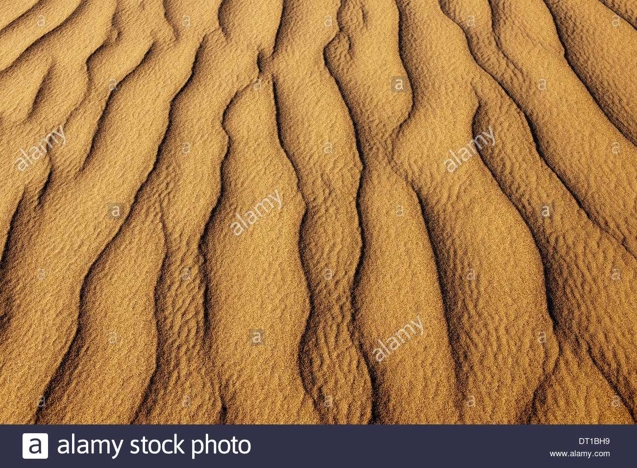 Namib-Naukluft National Park Namibie les habitudes des dunes de sable Namib-Naukluft National Park Photo Stock
