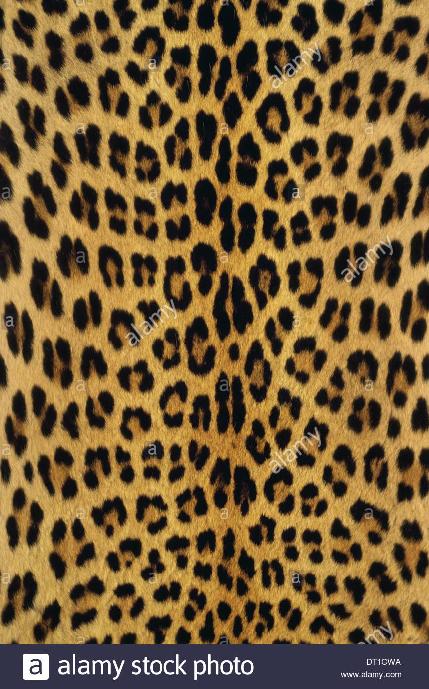 Botswana Botswana Pantherpardus en peau de léopard Banque D'Images