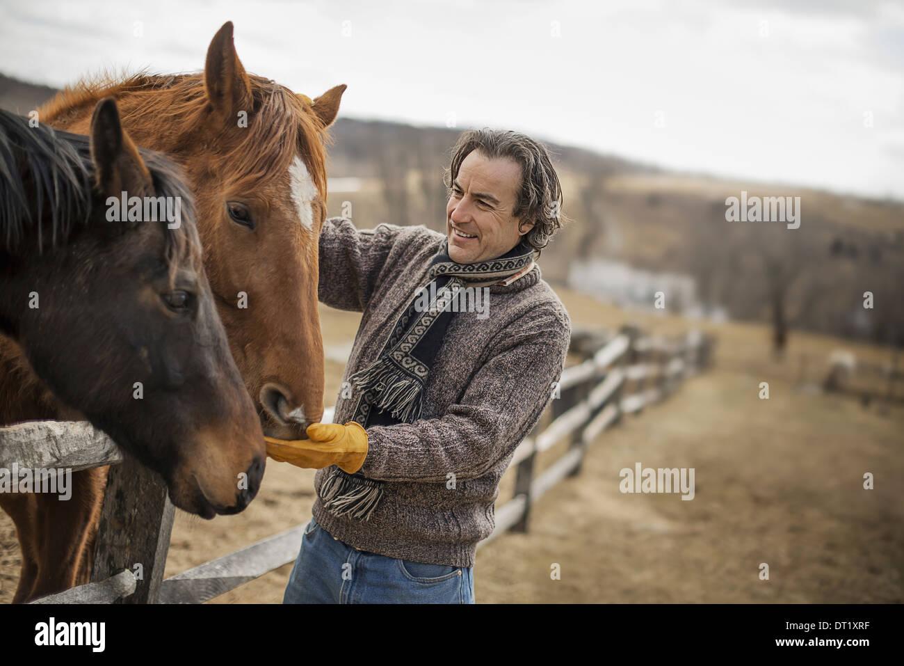 Un homme fixant un poster et clôture autour d'un enclos pour chevaux Photo Stock