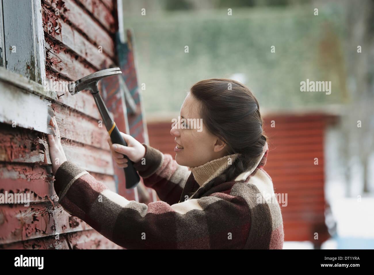 Une ferme biologique dans le nord de New York en hiver, une femme avec un marteau à réparer les bardeaux sur une grange Photo Stock