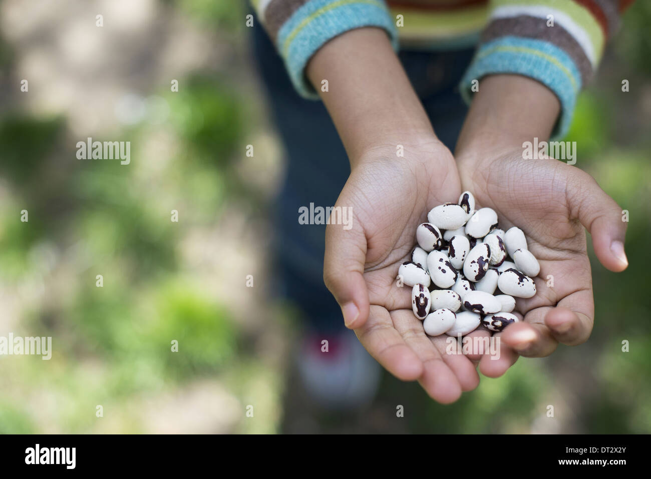 Un jeune garçon tenant une poignée de haricots Photo Stock