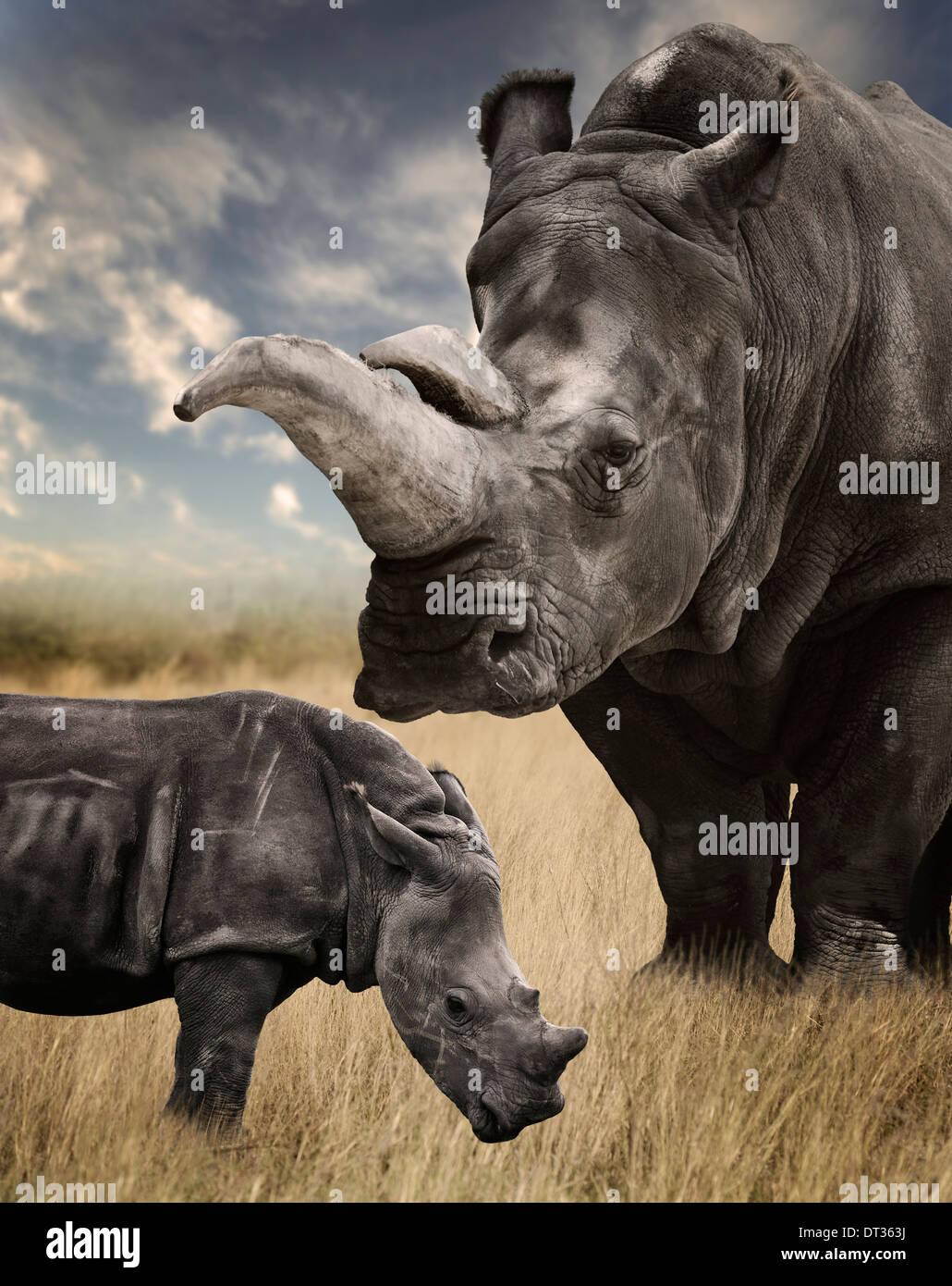 Mère et Bébé rhinocéros blanc le pâturage Photo Stock