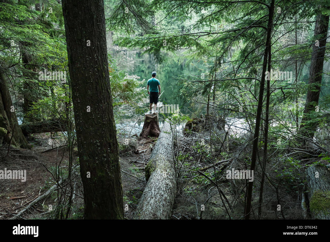 Homme debout en forêt, Buntzen Lake, British Columbia, Canada Photo Stock