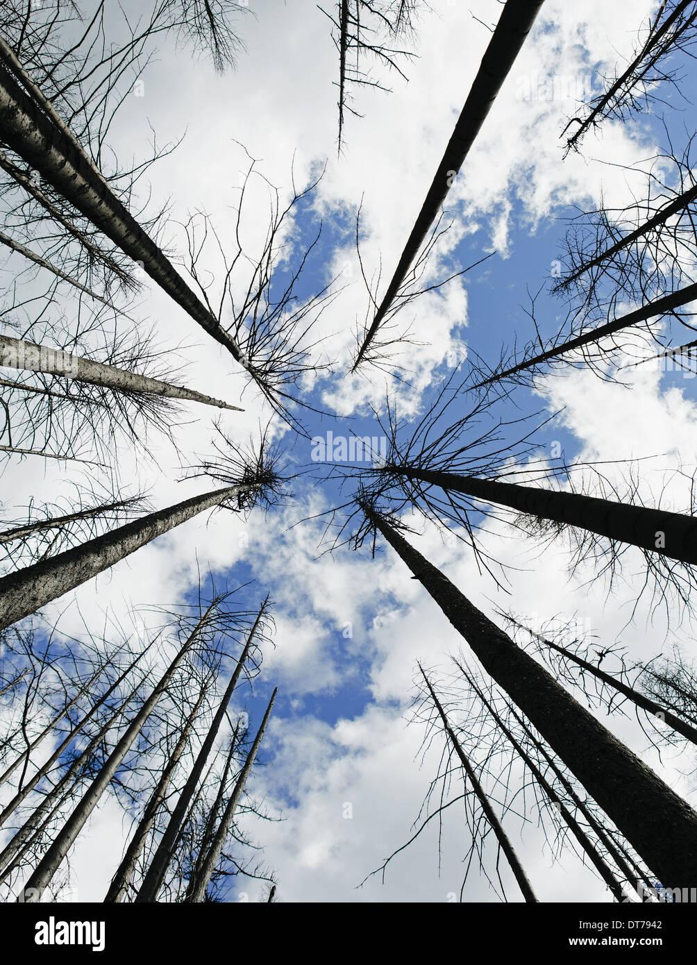 Feu de forêt endommagés, arbres et ciel (à partir de l'incendie de la Montagne Table 2012), Okanogan-Wenatchee NP, près de Blewett Col Photo Stock