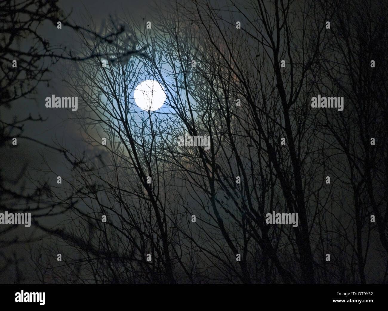 Pleine lune à travers les arbres (distance) Banque D'Images