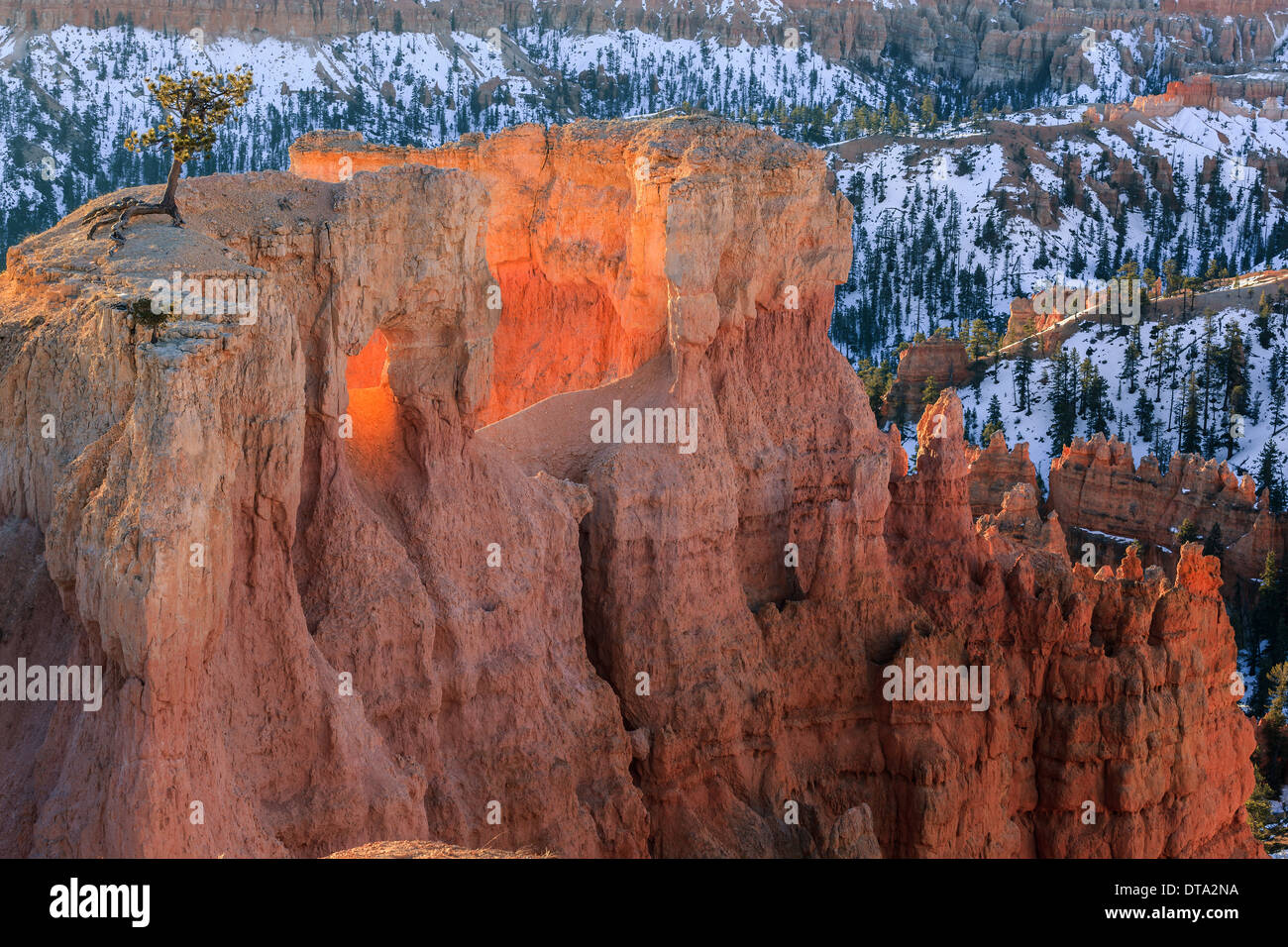 Lever du soleil d'hiver dans le Parc National de Bryce Canyon, Utah - USA Photo Stock