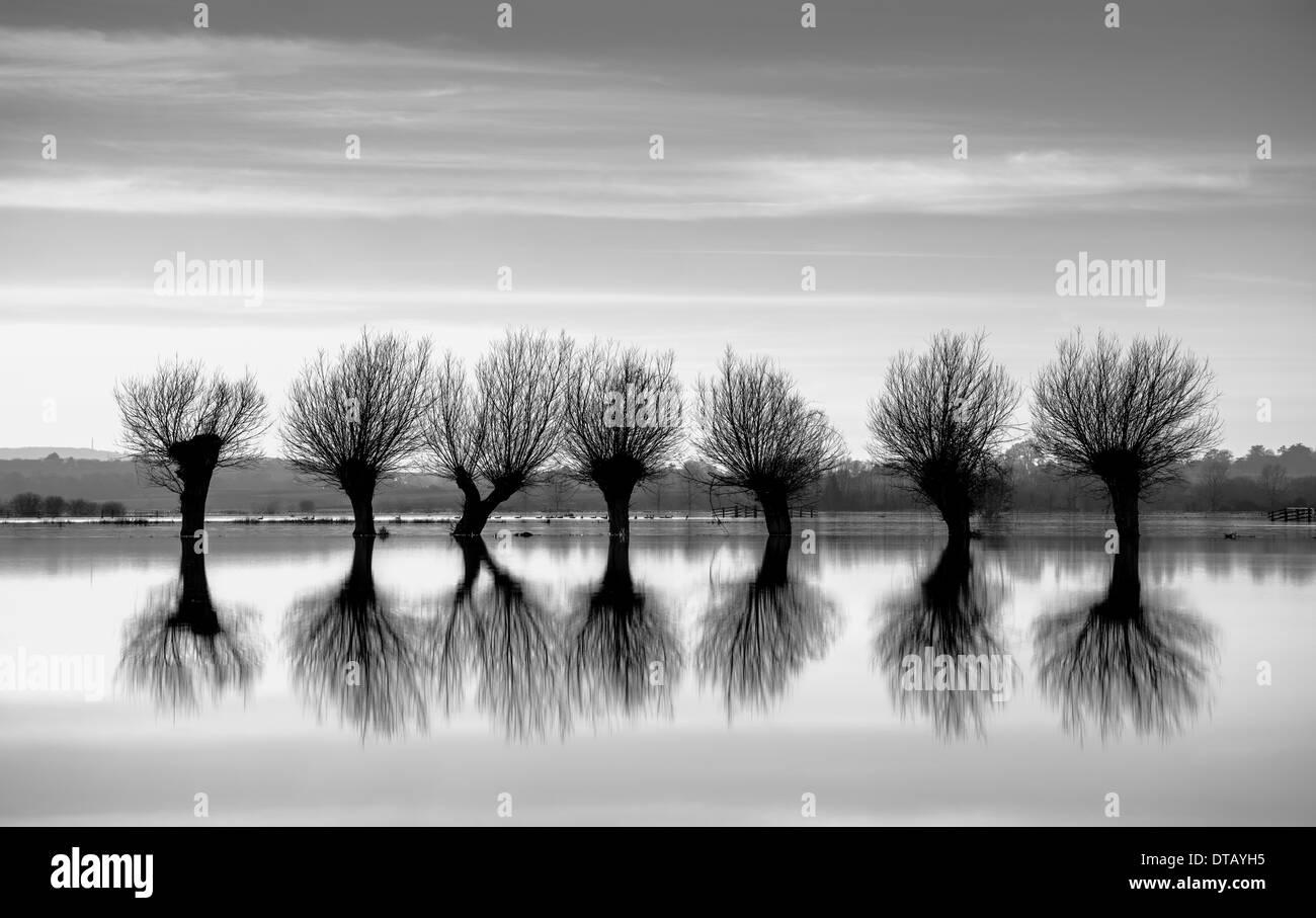 Une rangée de saules étêtés,silhouette sur le paysage inondé des Somerset Levels. Photo Stock