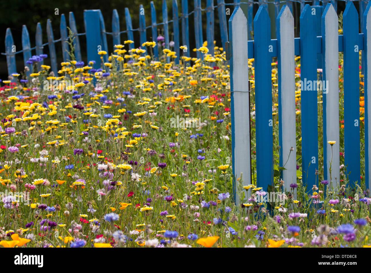 Image De Parterre De Fleurs parterre de fleurs, lit, lit de fleur, fleur fleurs pré