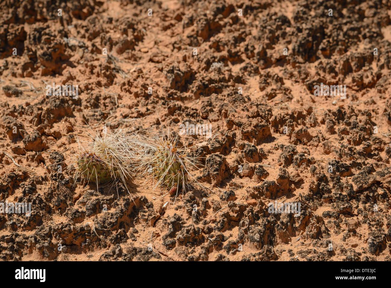 Croûte de sol biologique, les aiguilles de Canyonlands National Park, Utah, USA Photo Stock
