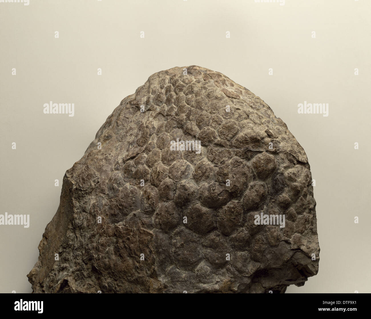 La peau de sauropodes impression Photo Stock