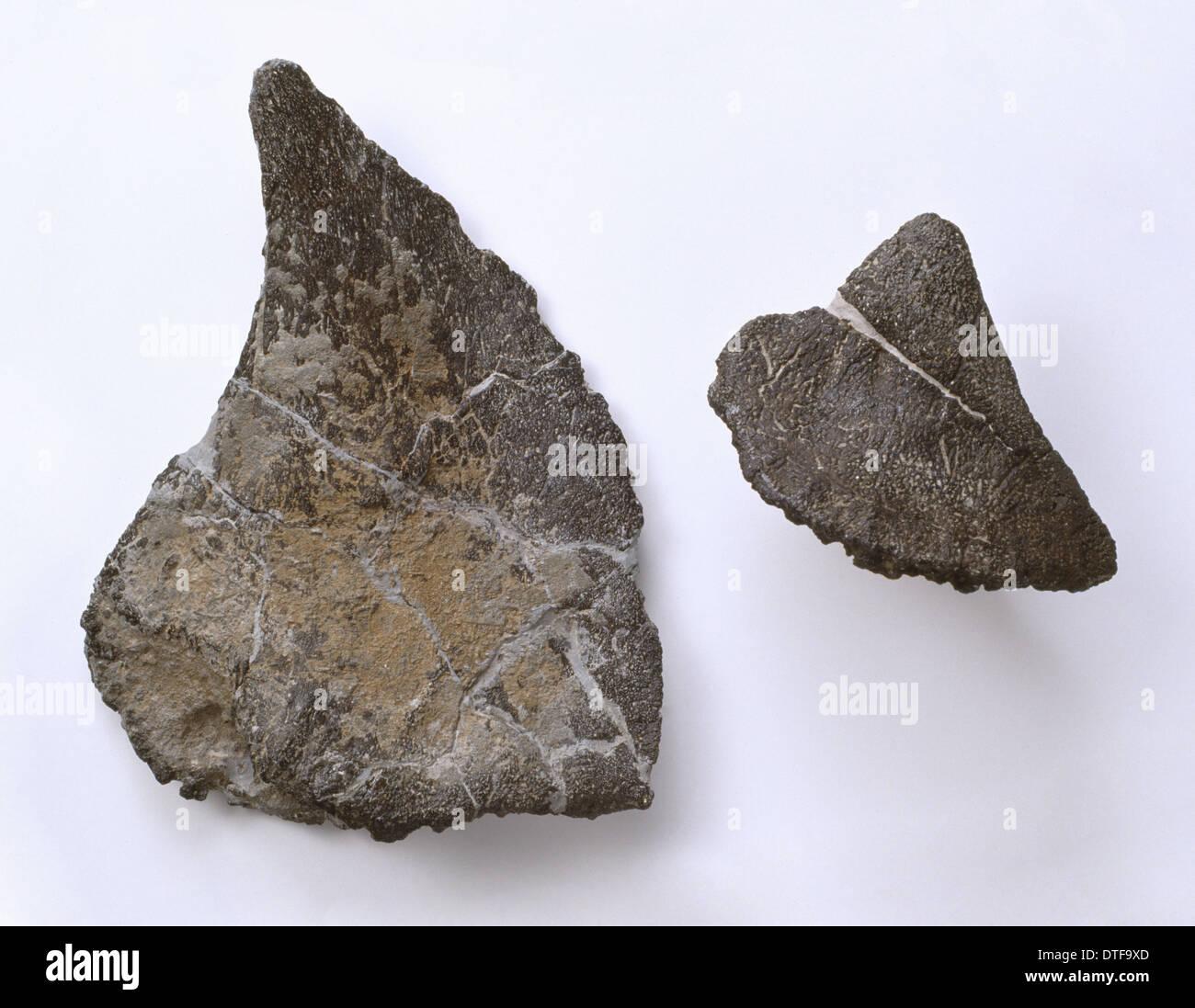 Polacanthus fossiles Photo Stock