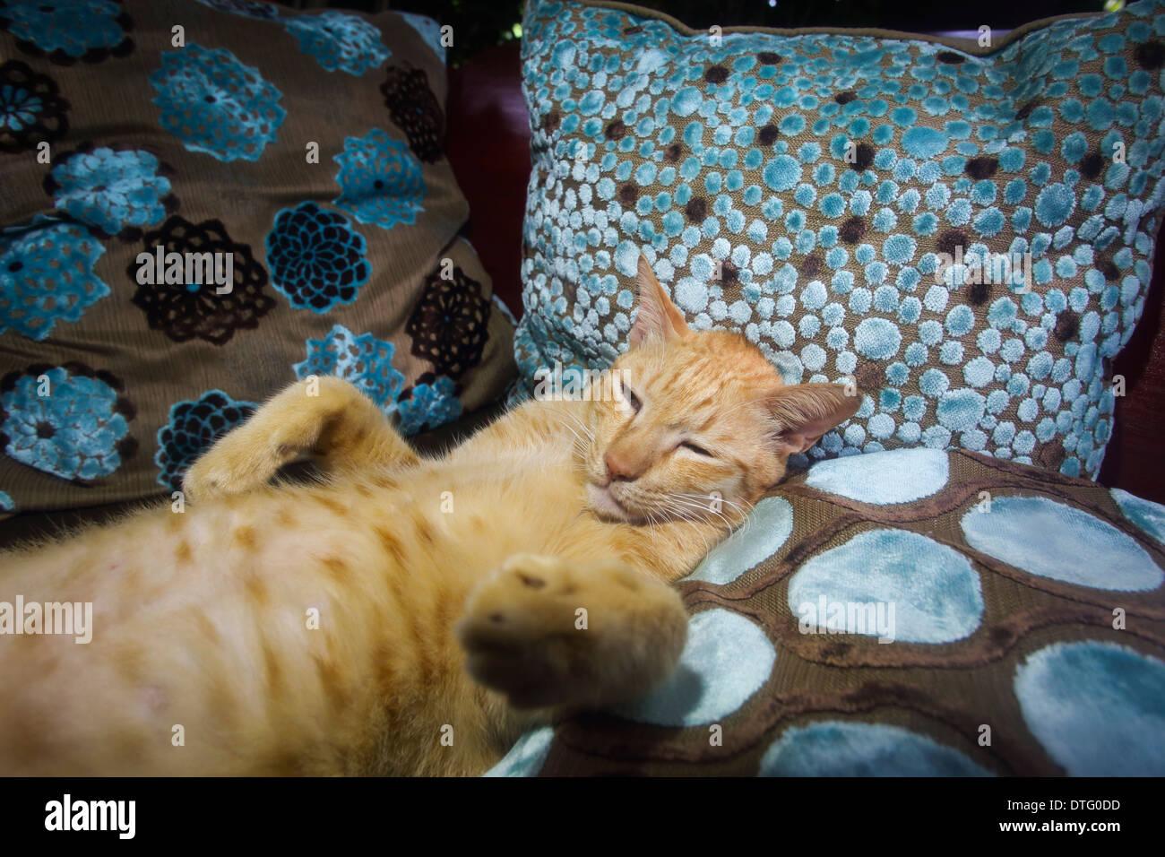 Lazy cat chatoune gingembre ayant un sommeil entre les coussins de lit Photo Stock