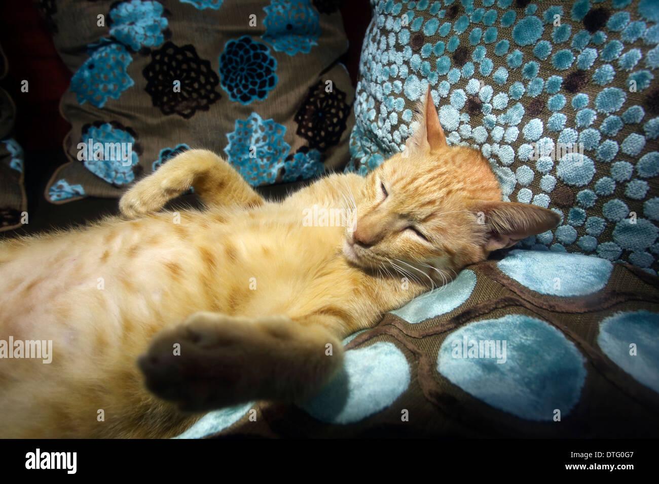 Lazy cat ayant un sommeil de gingembre Photo Stock