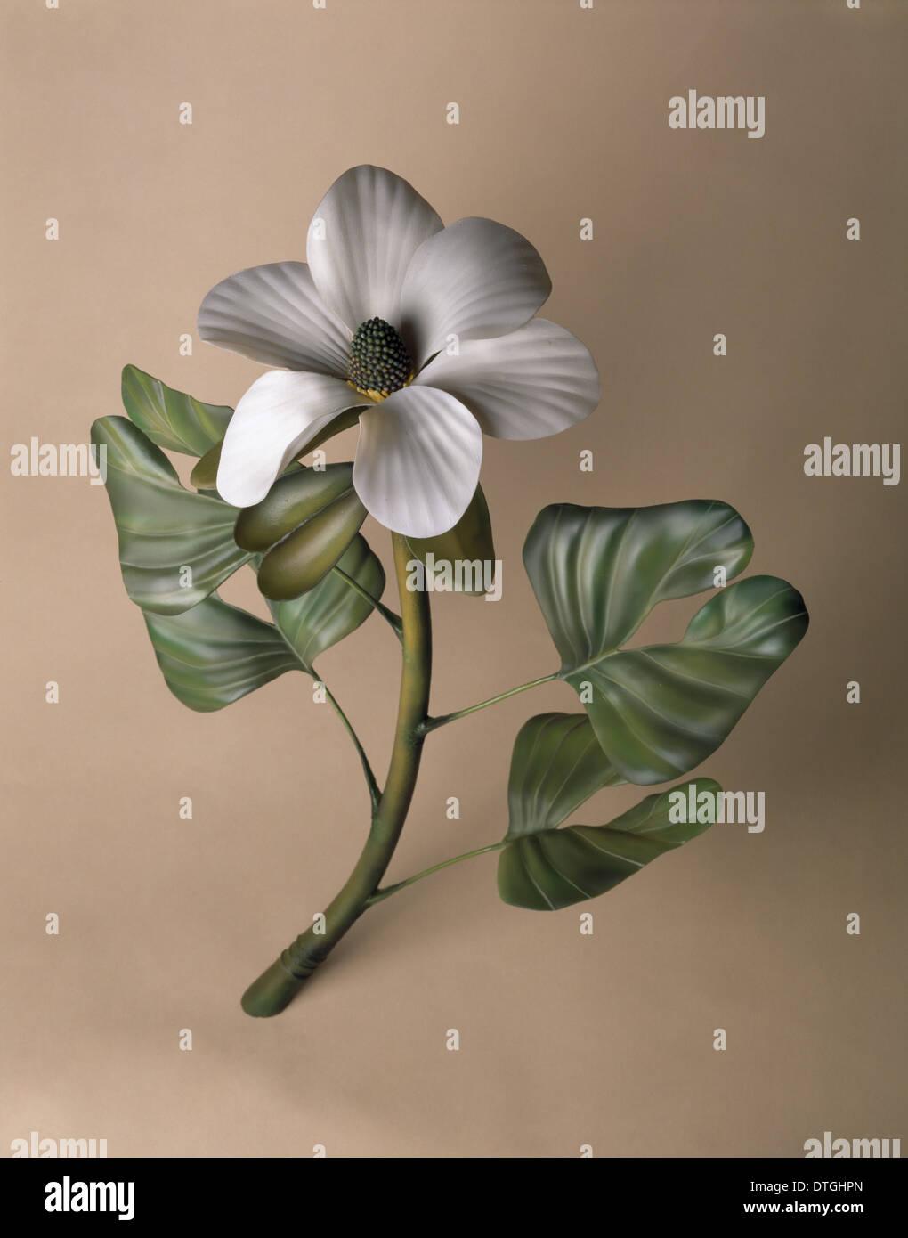 Modèle de plante à floraison hâtive. Photo Stock