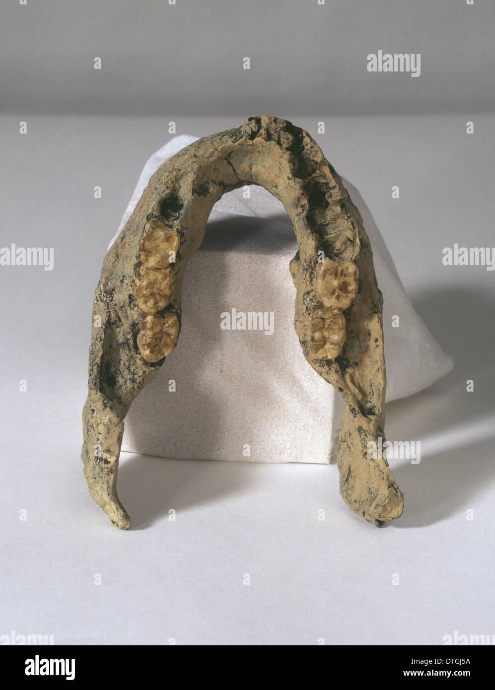 L'Homo erectus mandibule (SK 15) Photo Stock