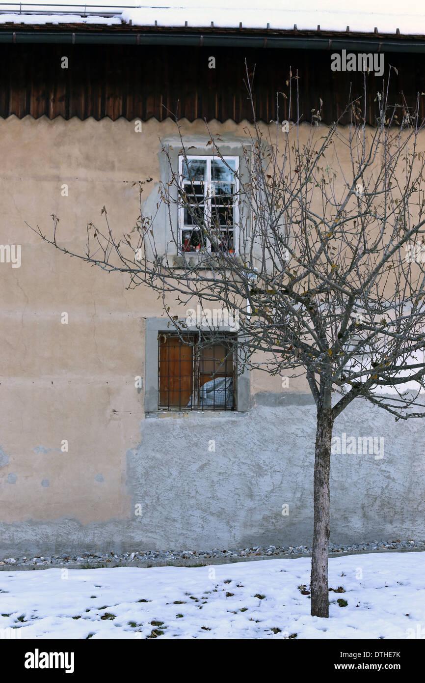 Un arbre en face de l'ancien bâtiment Photo Stock