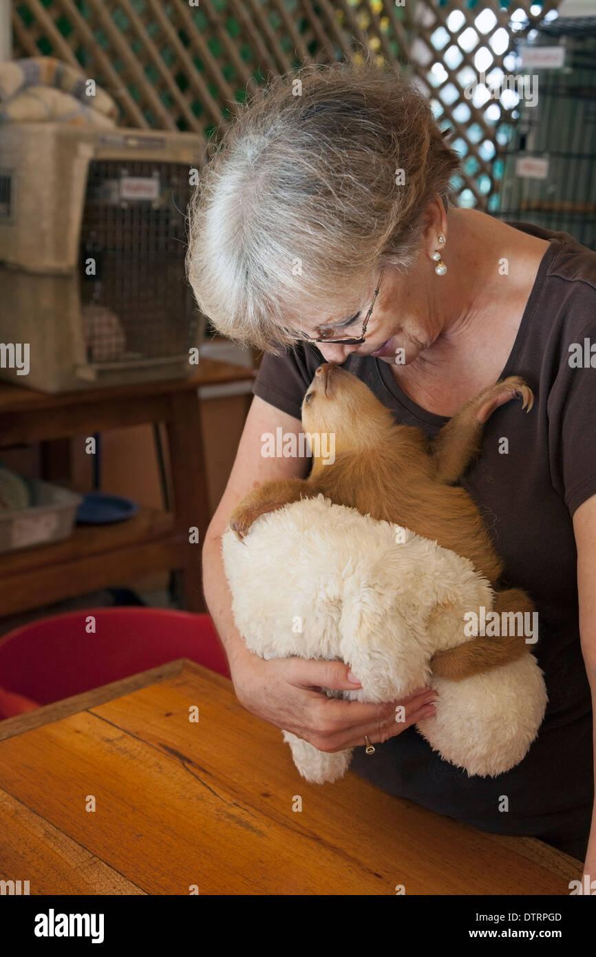 Propriétaire sanctuaire holding baby orphan Hoffmann's Deux-toed Sloth (Choloepus hoffmanni) le paresseux Sanctuaire de Costa Rica Photo Stock