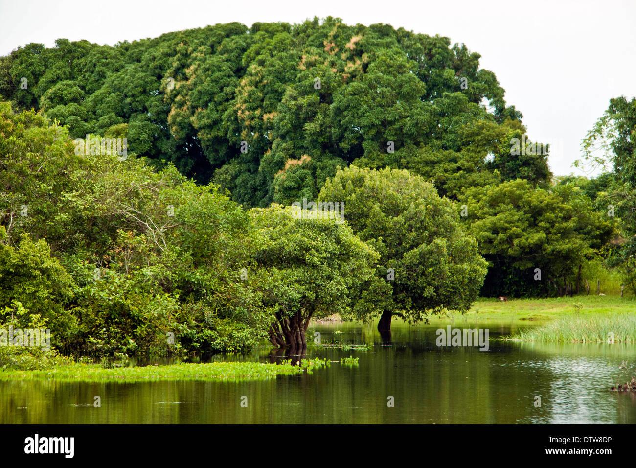 En été Ce Lac Nétait Quun écosystème De Savane Quand La Pluie
