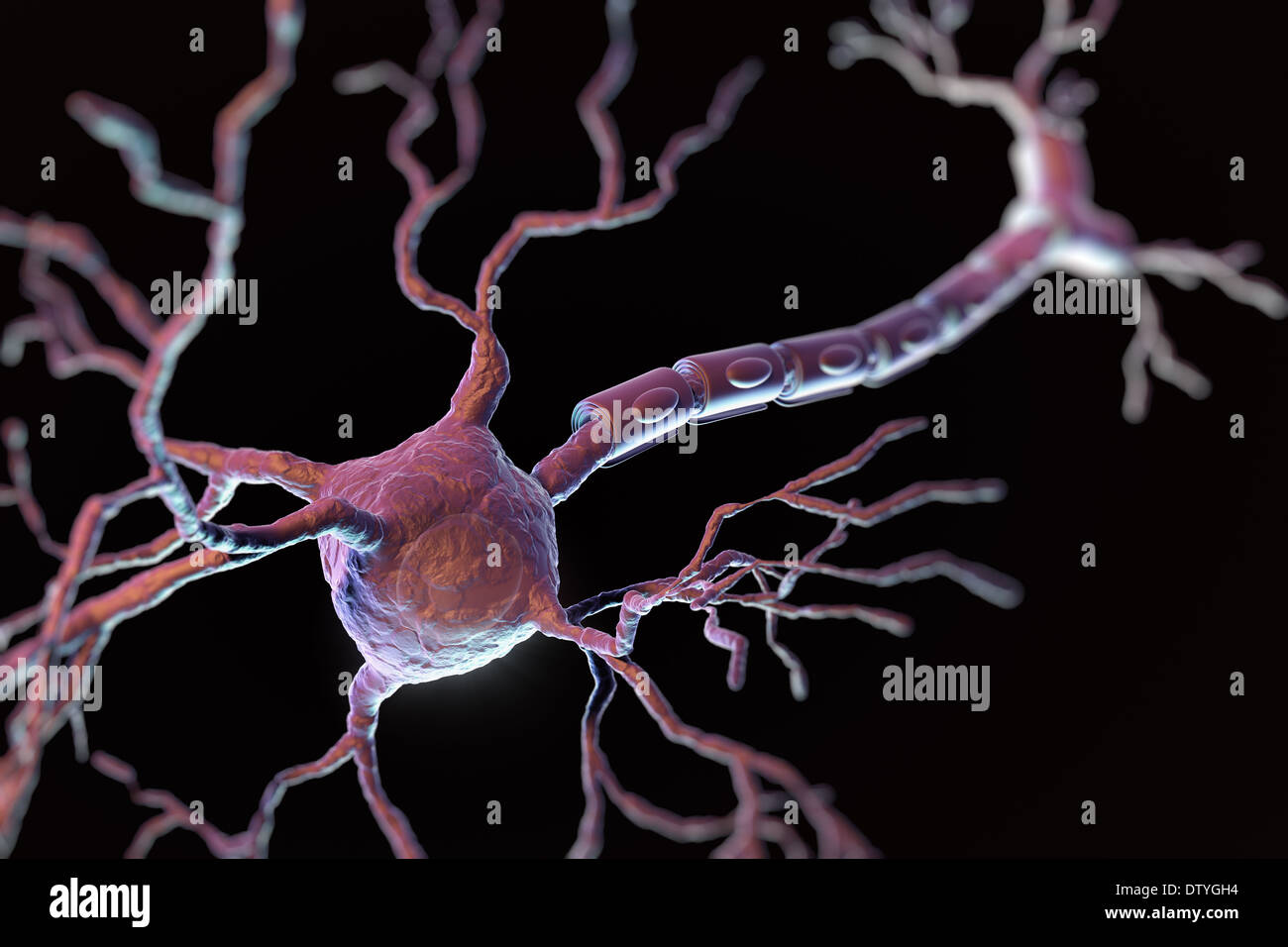 Neurone multipolaire Photo Stock