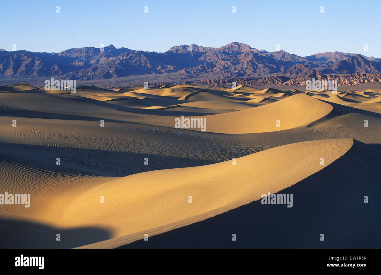 Elk248-2175 Californie, Death Valley National Park, Stovepipe Wells, dunes de sable Banque D'Images