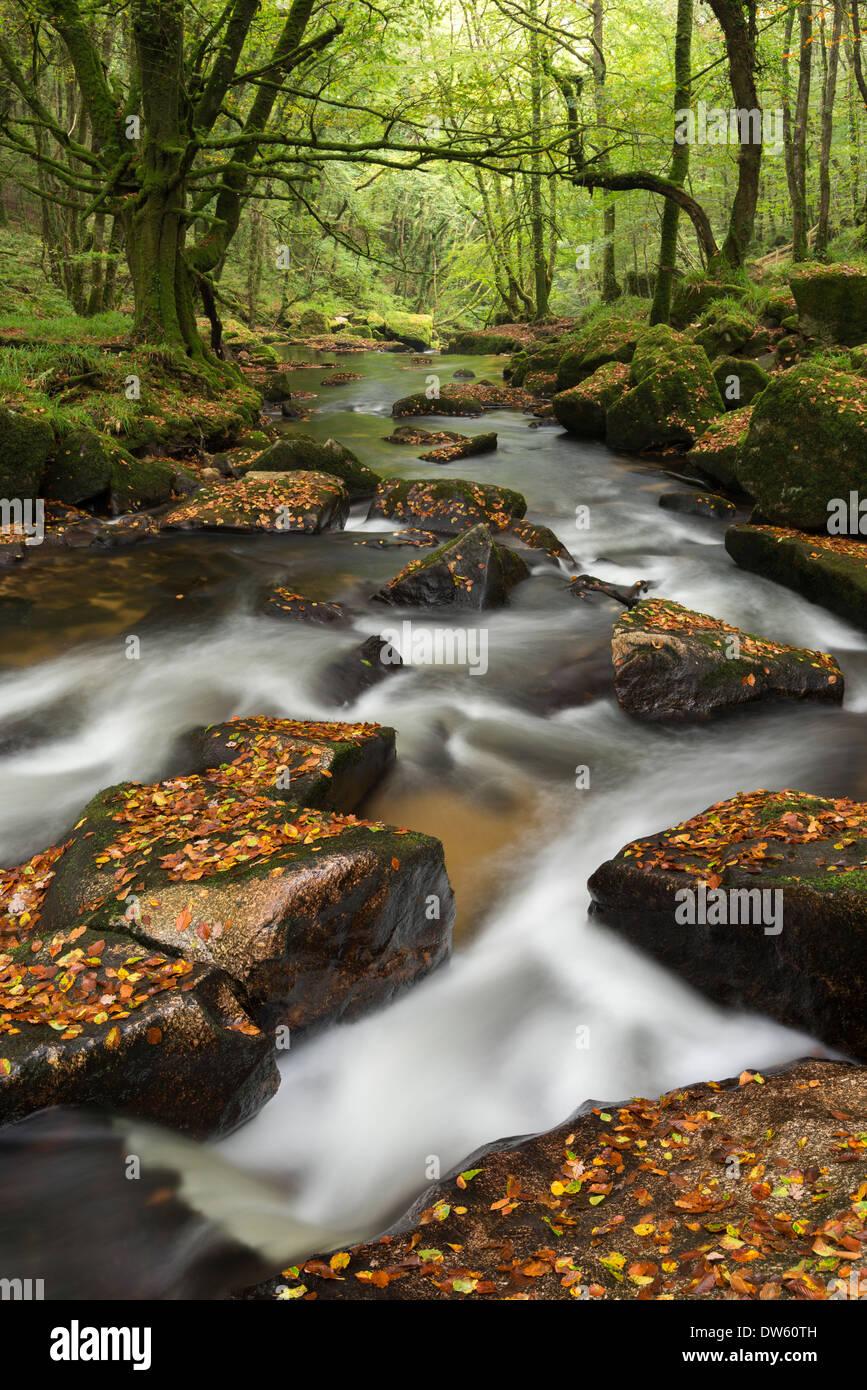 Les roches de la rivière Fowey tumbling par Golitha Falls, à Cornwall, en Angleterre. L'automne (septembre) 2013. Banque D'Images