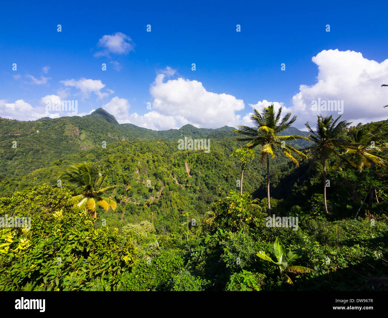 Jungle à Anse La Verdure, Sainte Lucie, Îles du Vent, Petites Antilles Photo Stock