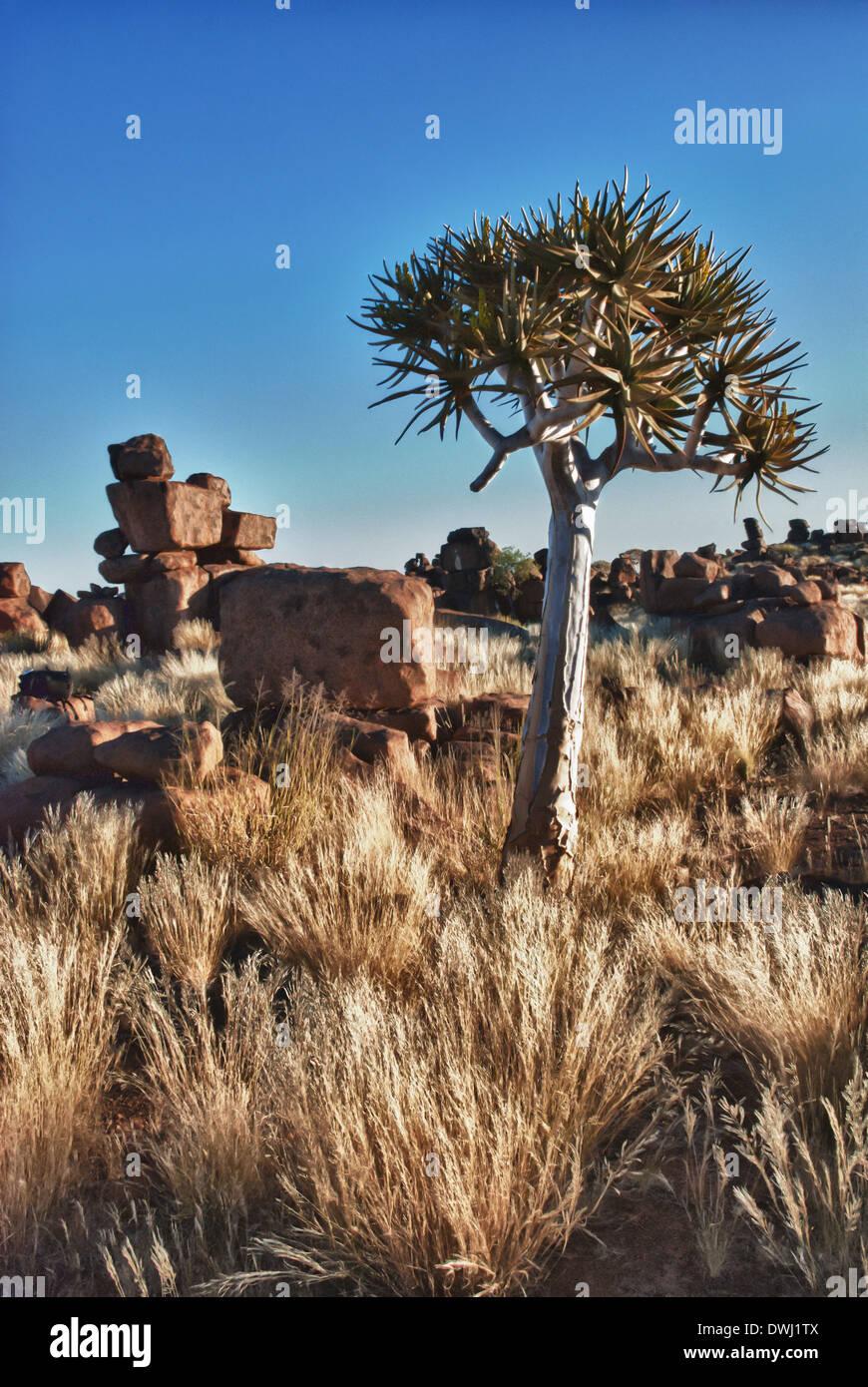 Quiver Tree, Kokerboom, Aloe dichotoma, blocs de dolérite et Géant, aire de jeu, Keetmannshoop, la Namibie, l'Afrique de l'Ouest Photo Stock