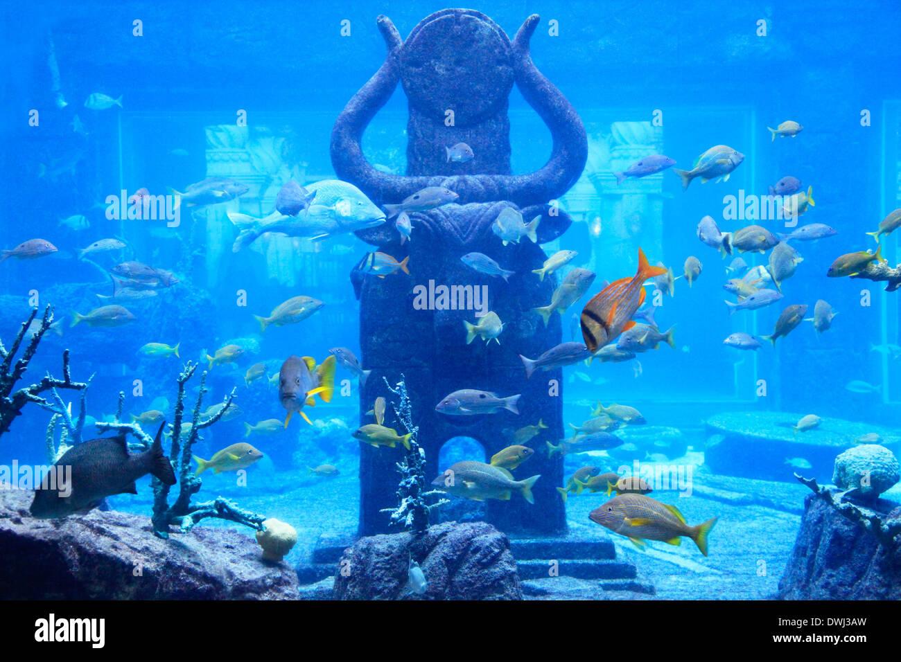 Aquarium dans les Bahamas, l'île de paradis Photo Stock