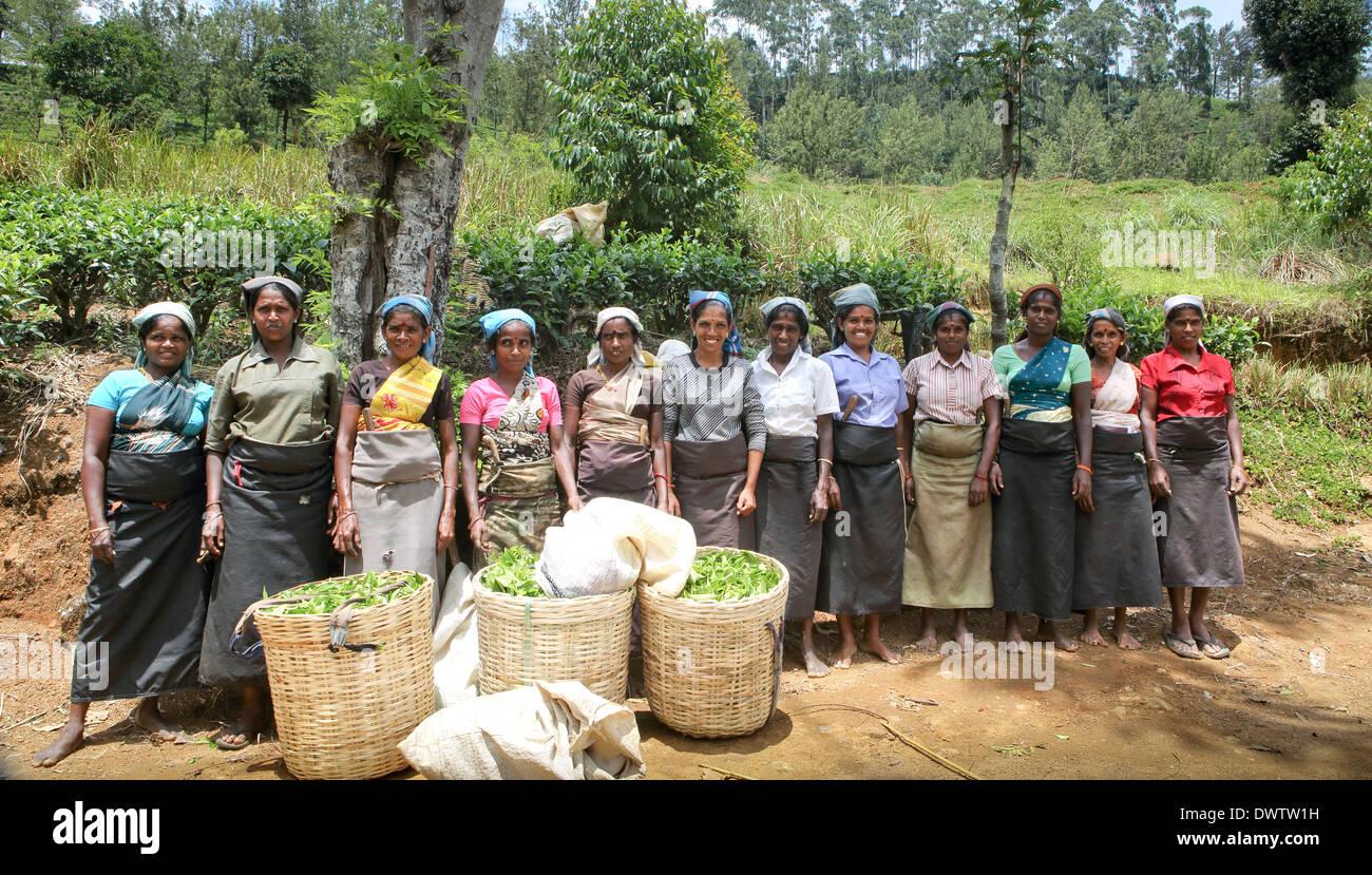 Groupe de cueilleurs de thé qui pose pour la photo de la plantation de thé Photo Stock