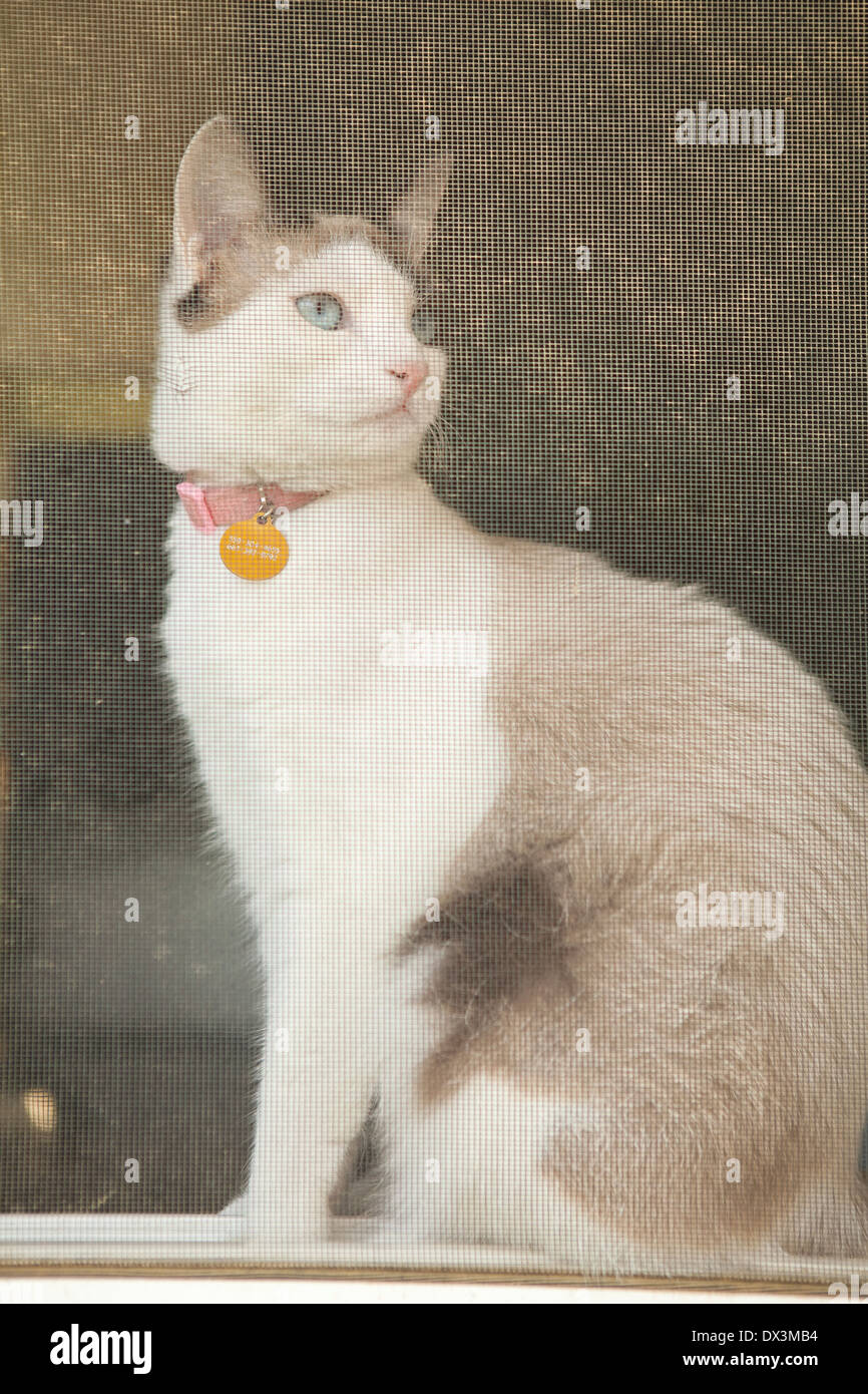 Curieux chat assis à la fenêtre de l'écran, à l'écart, low angle view Photo Stock