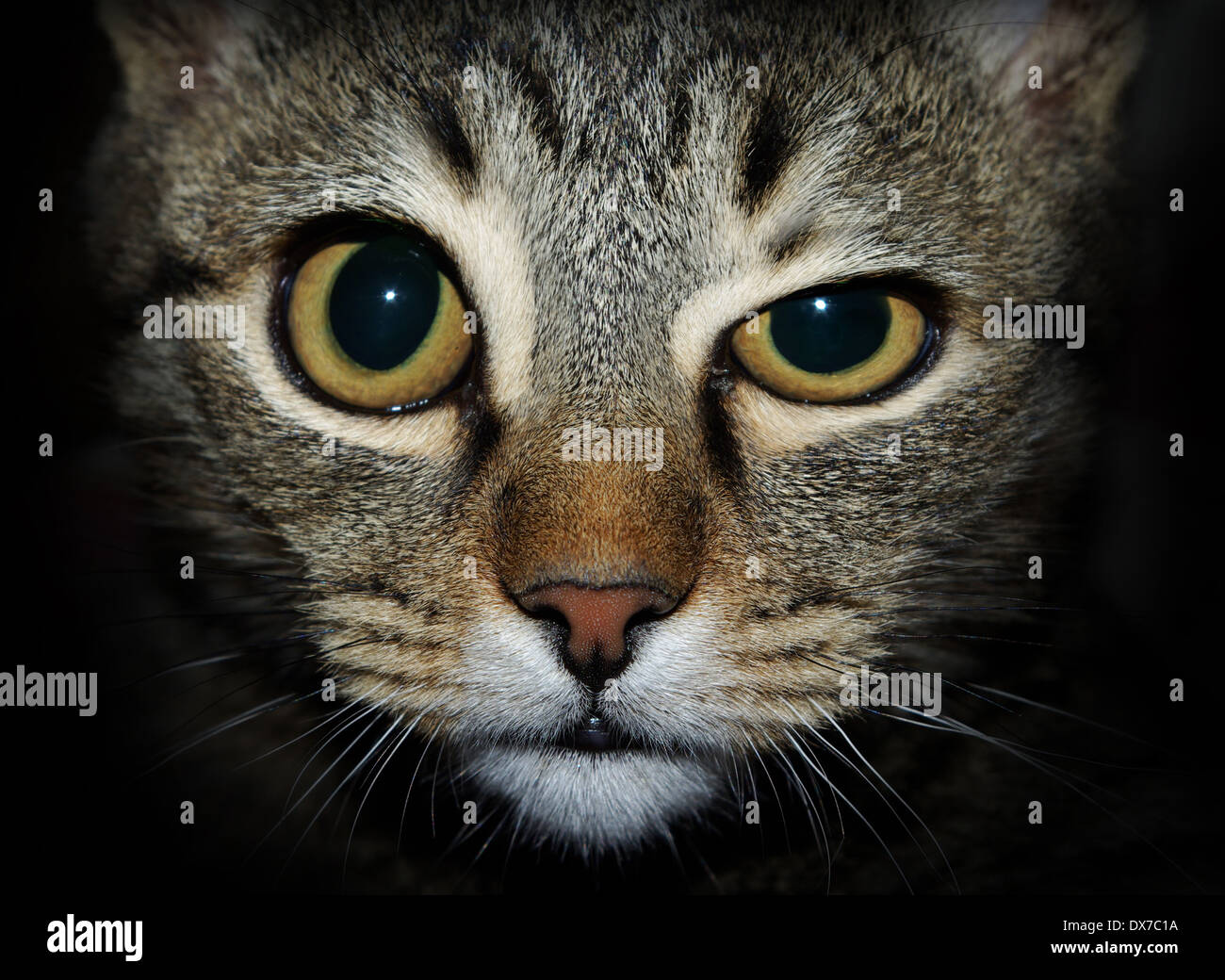 Crazy Cat looking at you Photo Stock