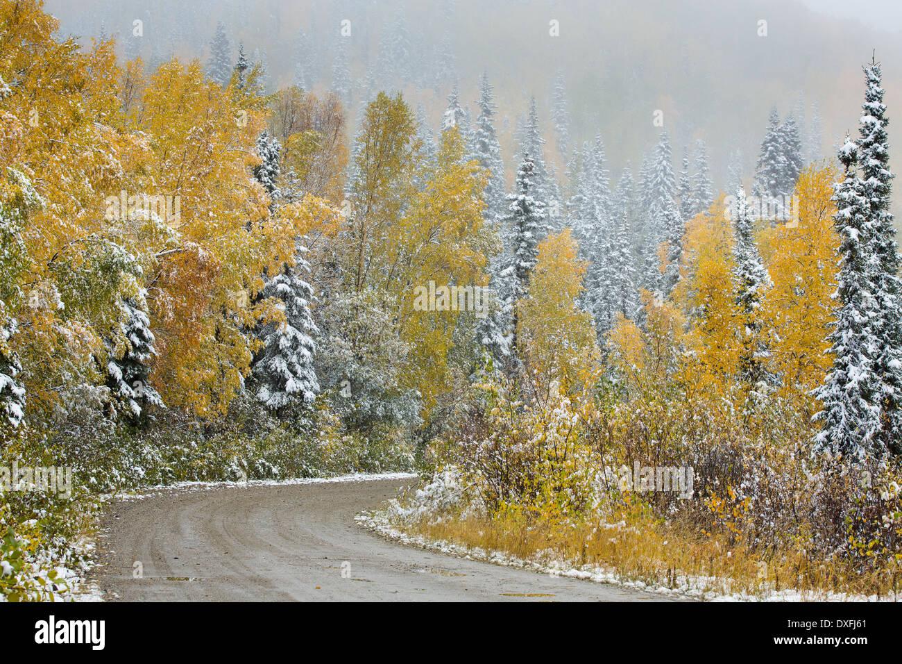 Début de la neige et des couleurs d'automne sur la piste de l'argent c Mayo, au Yukon, Canada Photo Stock